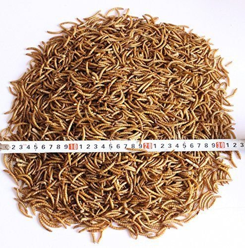 10-LBS-Natural-Dried-Mealworms-for-Wild-Birds-Chicken-Duck-etc-2-bags-of-5lbs-0-1