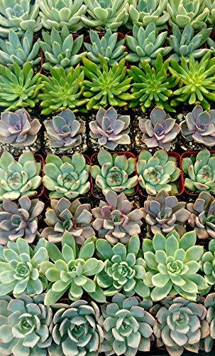 128-Beautiful-Succulent-Wedding-Favors-by-Shop-Succulents-0