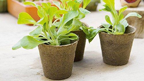 Culinary-Herb-Growing-Kit-0