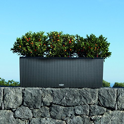 Lechuza-Trio-Cottage-30-Planter-0-1