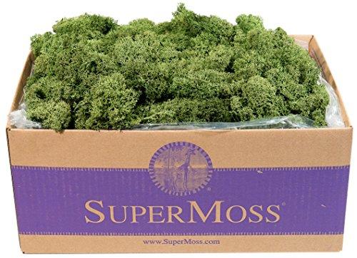 SuperMoss-25155-Reindeer-Moss-Preserved-Box-3-lb-Basil-0
