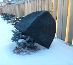 Winter-Shrub-Cover-0-2