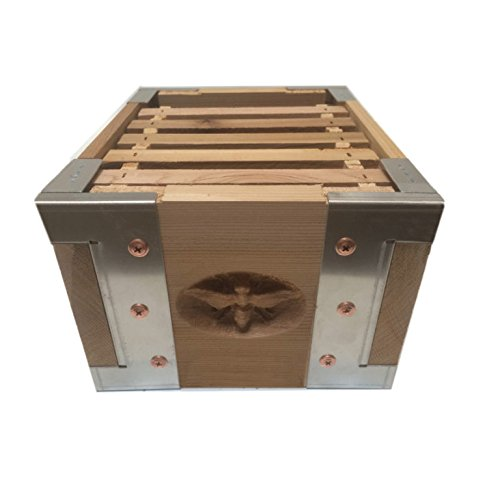 Eco-Bee-Box-Mini-Bee-Hive-1-Box-Hive-Stack-Aluminum-Brackets-0-2