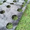 OriginA-3x50ft-Weed-Control-Fabric-with-Ready-Made-Planting-Holes-Ground-Cover-Weed-Barrier-Eco-Friendly-for-Vegetable-Garden-LandscapeDia-62-Row-0